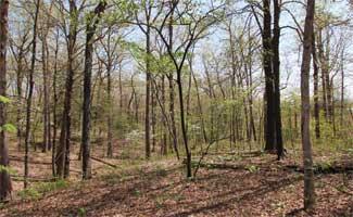 Grendel Trail