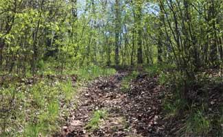 Sonnenblick Trail