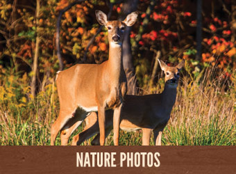 Nature Photo Gallery