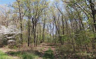 Wynnbrook Trail